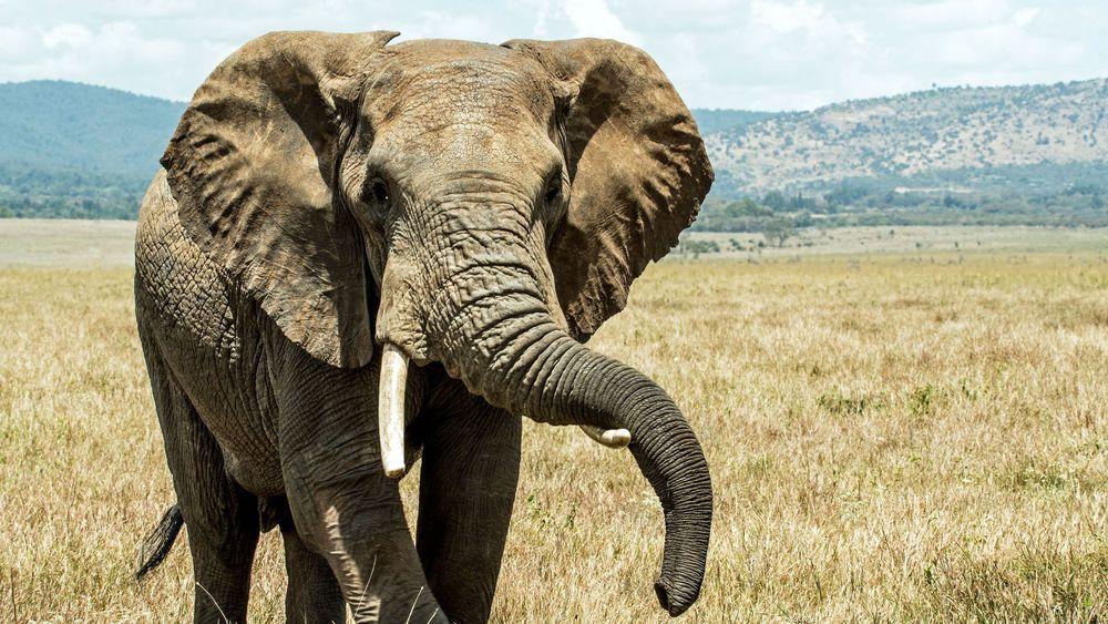 Eléphant, , l'animal porte bonheur venant de l'hindouisme