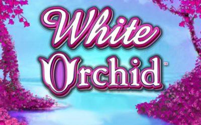 Jouer gratuitement à la machine à sous White Orchid